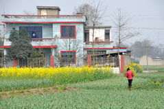 Pengzhou, China: Blue Tiled Farmhouse and Crops Stock Images