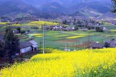 Pengzhou, China: Campos do Rapeseed amarelo Foto de Stock Royalty Free