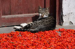 Pengzhou, China: Cat and Chili Peppers Stock Photography