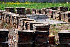 Pengzhou, China: Colmenas comerciales de la abeja Foto de archivo libre de regalías