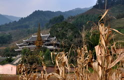 Pengzhou, China: Corn Stalks and Taoist Temple Royalty Free Stock Photography