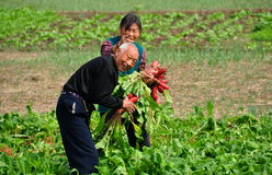 Pengzhou, China: Couple Picking Radishes Royalty Free Stock Images