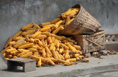 Pengzhou, China: Drying Corn Stock Photos