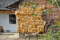 Pengzhou, China: Drying Corn on Bamboo Poles Royalty Free Stock Images