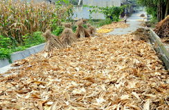 Pengzhou, China: Drying Corn Husks on Roadway Stock Photo