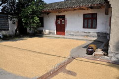 Pengzhou, China: Drying Rice Grains Royalty Free Stock Image