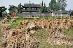 Pengzhou, China: Drying Rice Stalks & Temple Royalty Free Stock Photos