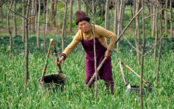 Pengzhou, China: Elderly Woman Working in Field Royalty Free Stock Image