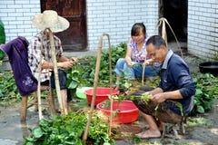 Pengzhou, China: Familie, die Soyabohnen schält Lizenzfreies Stockfoto