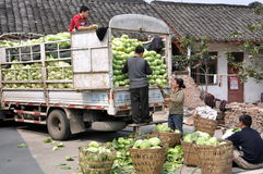 Pengzhou, China: Family Loading Cabbages Royalty Free Stock Photo