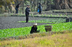 Pengzhou, China: Family Working in Field Stock Image