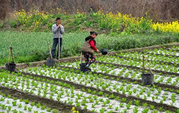 Pengzhou, China: Farm Couple Working in Field Stock Photos