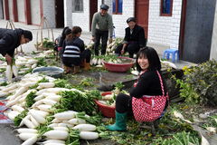 Pengzhou, China: Farm Family Washing Radishes. Family workers washing freshly dug white daikon radishes in front of their home in preparation for shipment to stock image