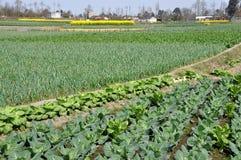 Pengzhou, China: Farm Fields of Produce Stock Photos