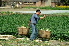 Pengzhou, China: Farmer with Baskets of Radishes Stock Photography