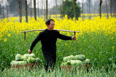 Pengzhou, China: Farmer with Cabbages Royalty Free Stock Photo