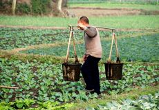 Pengzhou, China: Farmer Carrying Water Buckets Royalty Free Stock Photography