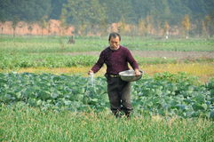 Pengzhou, China: Farmer Fertilising Crops Royalty Free Stock Images