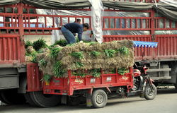 Pengzhou, China: Farmer with Green Onions Stock Photos