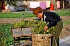 Pengzhou, China: Farmer with Greens Stock Images