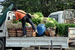 Pengzhou, China: Farmer Loading Celery Stock Photo