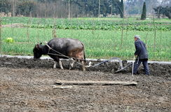 Pengzhou, China: Farmer Plowing Field Royalty Free Stock Photo