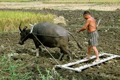 Pengzhou, China: Farmer Plowing with Water Buffalo Royalty Free Stock Photos