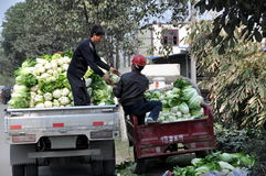 Pengzhou, China: Farmer's with Cabbages Stock Image