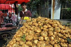 Pengzhou, China: Farmer Selling Di Gua Tubers Stock Images