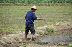 Pengzhou, China: Farmer Sewing Rice Seeds Stock Image