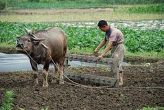 Pengzhou, China: Farmer and Water Buffalo Royalty Free Stock Images