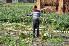 Pengzhou, China: Farmer With White Radishes. A farmer holding a bamboo pole with its attached baskets of freshly dug white Chinese radishes prepares to hoist it stock image
