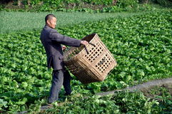 Pengzhou, China: Farmer With Wicker Basket Royalty Free Stock Photo