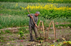 Pengzhou, China: Farmer Working in Field Royalty Free Stock Image