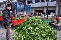 Pengzhou, China: Farmers with Bok Choy Royalty Free Stock Image