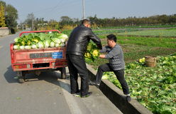 Pengzhou, China: Farmers with Bok Choy Stock Images