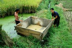 Pengzhou, China: Farmers Harvesting Rice Stock Photos