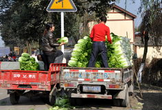 Pengzhou, China: Farmers Loading Bok Choy Stock Images