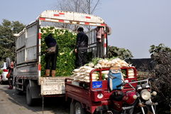 Pengzhou, China: Farmers Loading Radishes at Market Stock Image