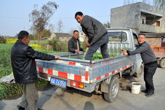 Pengzhou, China: Farmers Loading Truck Stock Image