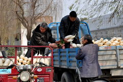 Pengzhou, china: Farmers Loading White Radishes. Farmers transferring freshly dug white Daikon radishes from a small motorcycle cart to a larger truck at a local royalty free stock photo