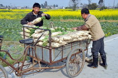 Pengzhou, China: Farmers with Radishes Stock Photo