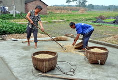 Pengzhou, China: Farmers with Rice Grains Stock Photos