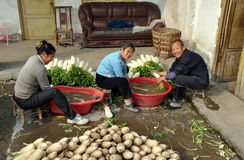 Pengzhou, China: Farmers Washing Radishes Royalty Free Stock Image