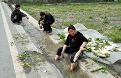 Pengzhou, China: Farmers Washing Radishes Royalty Free Stock Photos