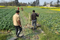 Pengzhou, China: Farmers Working in Field Stock Image