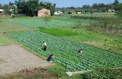 Pengzhou, China: Farmers Working Fields Stock Photos