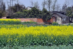 Pengzhou, China: Farmhouse & Rape Flowers Stock Photos