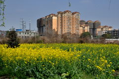 Pengzhou, China: Farmlands and Luxury Apartments Stock Photography