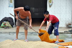 Pengzhou, China: Father & Son with Rice Royalty Free Stock Image